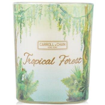 Купить Свеча из 100% Пчелиного Воска - Tropical Forest 65g/2.3oz, The Candle Company (Carroll & Chan)
